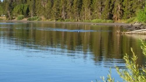 YNP Tri Swim View